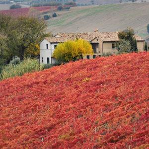 La Country House agriturismo sulle colline marchigiane